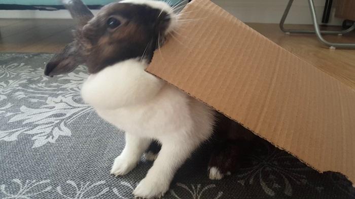 coniglio carta cartone