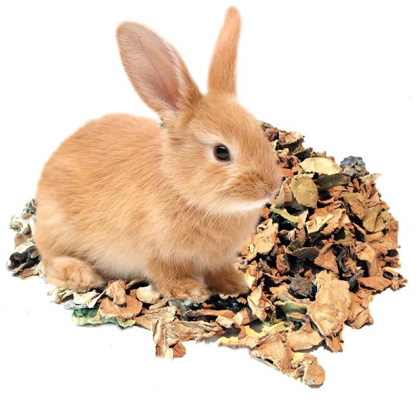 coniglio cartone
