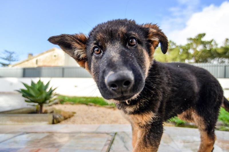 Se il cucciolo fa i bisogni in casa